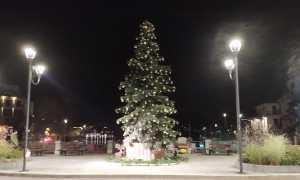 albero omegna