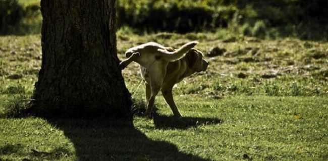 regolamento cani