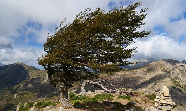 vento albero montagna