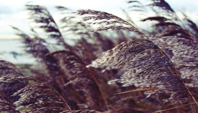 vento piante piegate