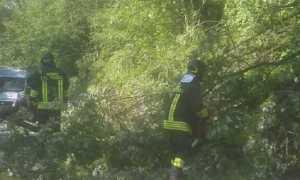 vigili del fuoco albero
