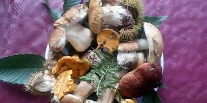 pettenasco-funghi.jpeg
